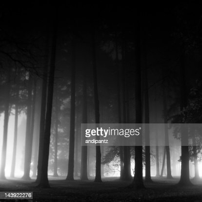 Dramatic black and white silhouette of trees on foggy night : Stock Photo