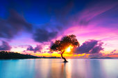 Dramatic colorful sky above silhouette big branch tree in beach at sunset, Thailand