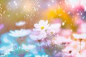 dramatic flower background