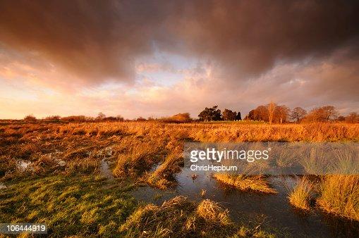 Dramatic Marshland Sunset