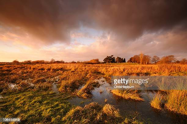 Dramatic Marshland Sunset