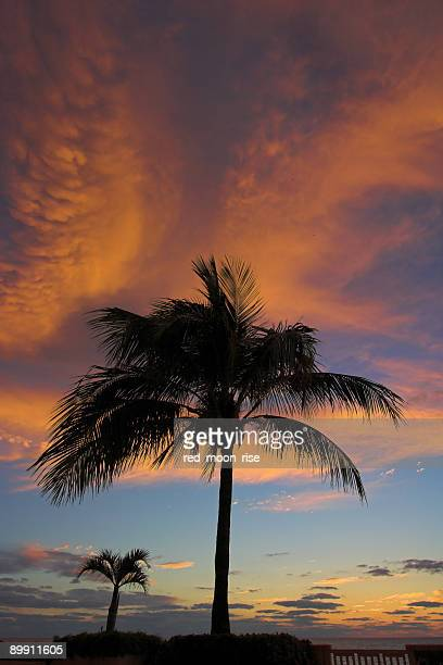 Dramatic red storm clouds with two palm trees