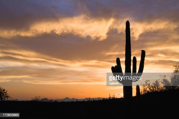Dramatic Sky over Southwestern Desert at Sunset