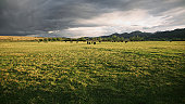 Dramatic Storm Clouds Over Cattle Ranch
