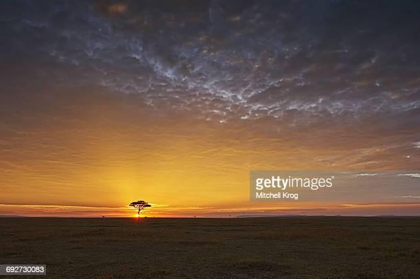 Dramatic sunrise landscape over the Masai Mara National Reserve in Kenya