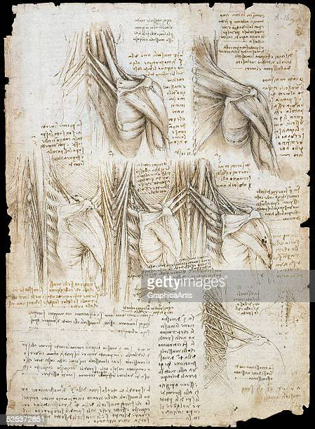 Drawing by Leonardo da Vinci of the muscles of the upper spine ink on paper 151011x Folio 16r 289 x 205 cm from the Royal Collection London