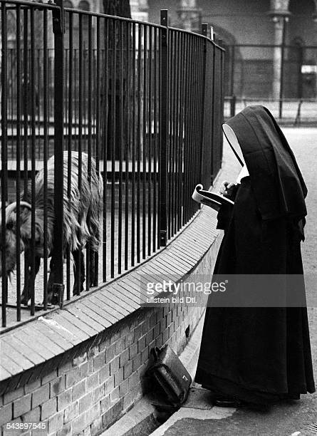 A drawing nun outside the goat enclosure at the zoo 1930 Photographer Seidenstuecker Published by 'Berliner Illustrirte Zeitung' 10/1930Vintage...