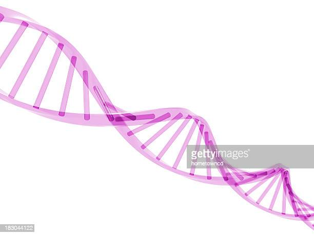 A 3D drawing of a purple DNA strand