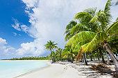 Dream Beach Bora-Bora Coconut Palm Trees French Polynesia