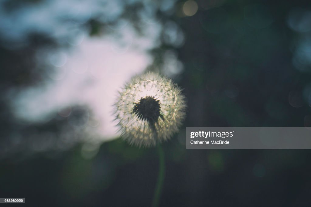 Dreams and Wishes... : Stock Photo