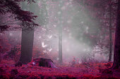Dreamy fairytale forest scene with magic fireflies, foggy surreal forest