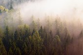 Dreamy misty forest  landscape. Majestic peaks of old trees  cut lighting mist. Deep valley is full of colorful fog and rocky hills are sticking up to Sun.