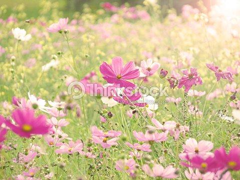 Mezcla De Ensueno Rosas Blancas Y Amarillo Flores Silvestres Meadow