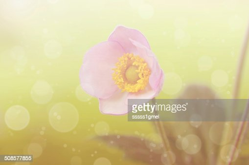 Dreamy photo of a beauty wildflower : Stock Photo