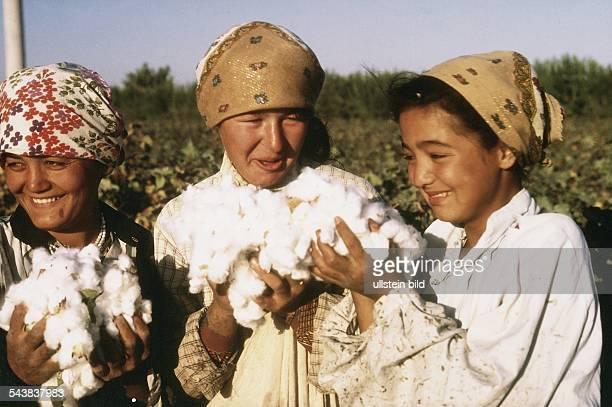 Drei junge Mädchen mit Kopftüchern bei der Baumwollernte in Usbekistan Sie stehen auf einem Feld in ihren Händen halten sie reife geöffnete...
