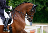 A close-up of beautiful dressage horse during the dressage test. You can see the perfect traditional harmony between the rider and the horse. The horse expressions showing concentration. Very nice det
