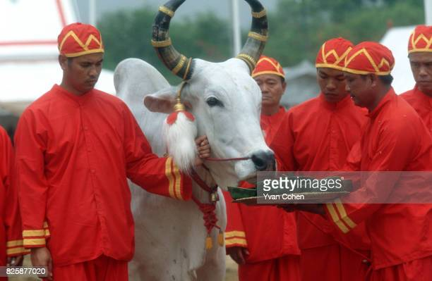Dressed in royal ceremonial costumes the official handlers of the royal cows offer a choice of grass rice corn beans sesame liquor and water to their...