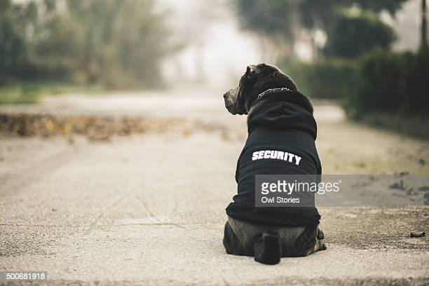 Dressed shar pei dog wearing hoodie sitting on a road