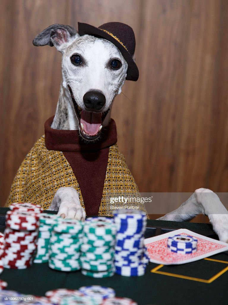 Gambling dog casino royale sean connery online