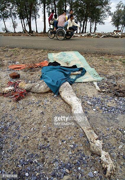 A dried body lies next to a road as locals travelling by Acehnese pedicab pass by in Lhok Nga 10 January 2005 The United Nations said 10 January it...