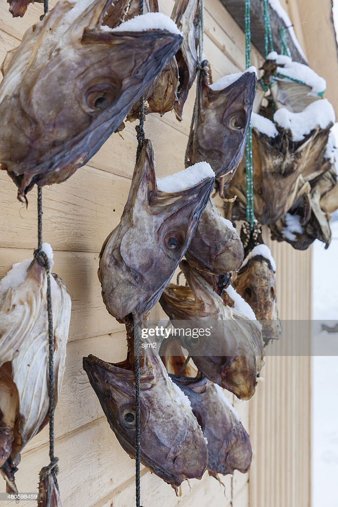dried cod fish heads in Iceland : Stock Photo