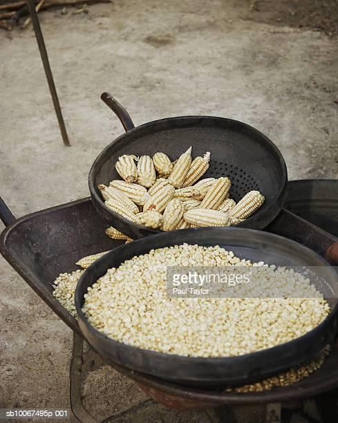 Dried corn, close-up