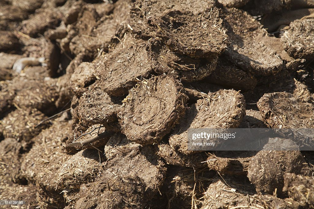 cow dung as a fuel From cow dung to biogas in karnataka, india beyond carbon india,  – reduction of the consumption of fuel wood,  from cow dung to biogas for cooking.