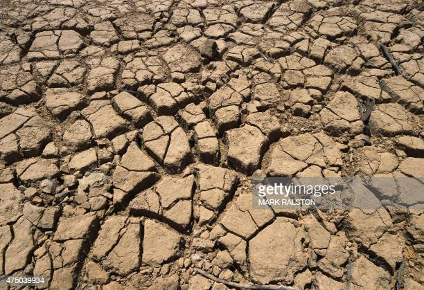 Dried cracked mud is seen at the New Melones Lake reservoir which is now at less than 20 percent capacity as a severe drought continues to affect...