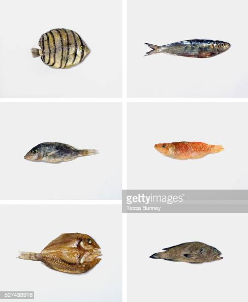 Bantayan island stock photos and pictures getty images for Dried fish philippines