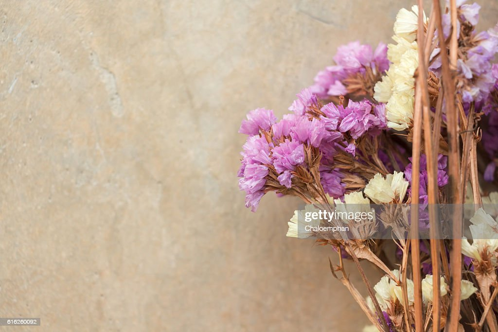 Dried flower can use for background : Foto de stock