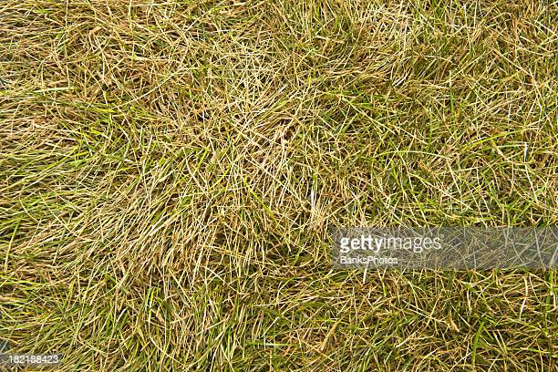 Dried Grass Background