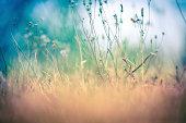 dried grass