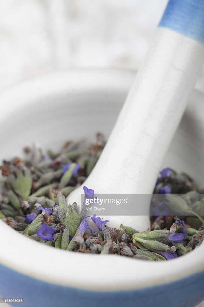 Dried lavender in a pestle and mortor : Stock Photo