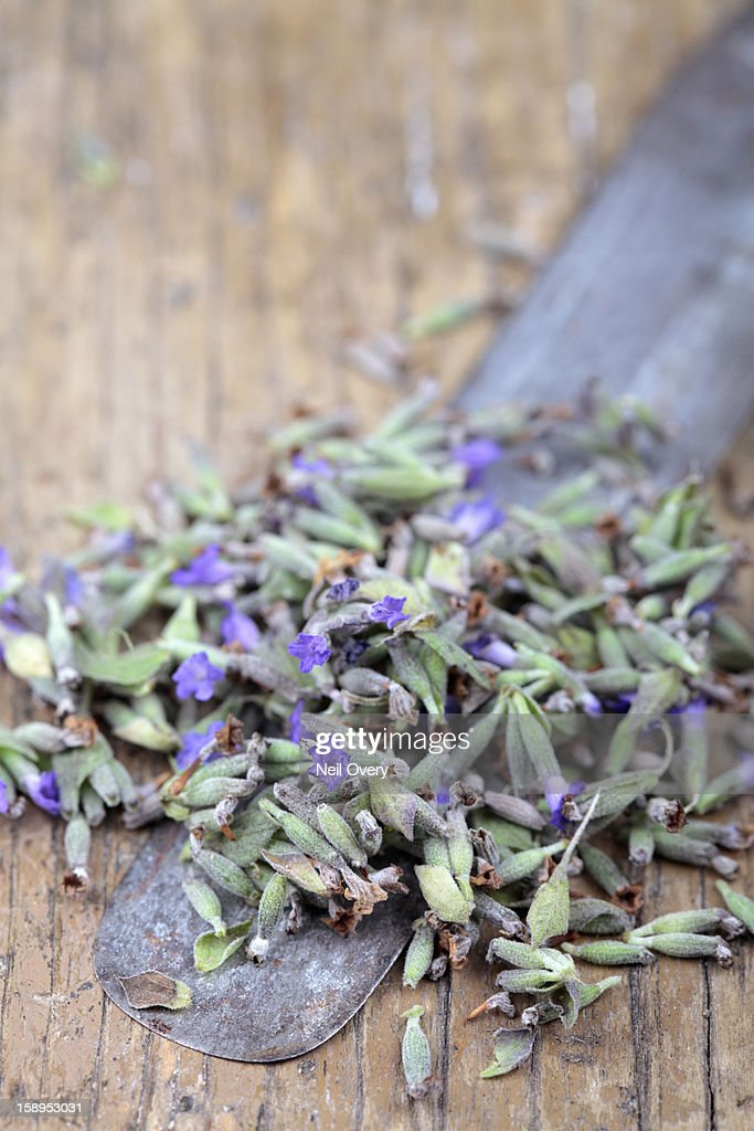 Dried lavender on an old knife : Stock Photo