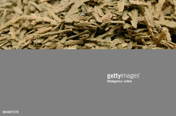Dried leaves of Thuja occidentalis also known as white cedar Ce Bai Ye Medicinal plant chinese medicine