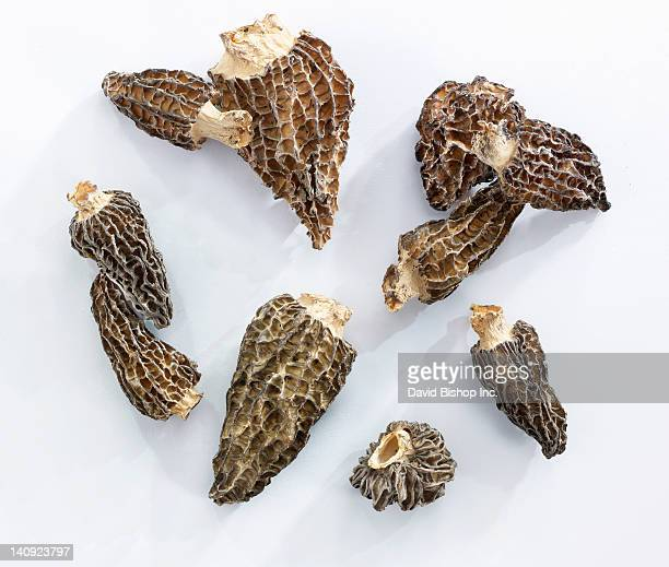 Dried Morel Mushrooms (Morchella Conica)