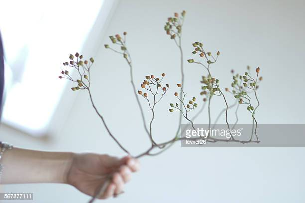 Dried Plant - Branch of Wild Rose