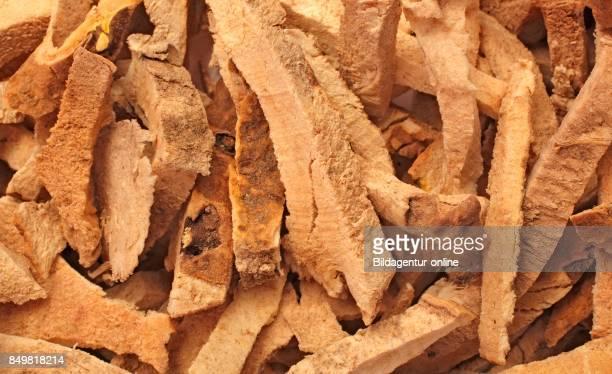 Dried Roots Of The Medicinal Plant Greater Yam Guyana Arrowroot Winged Yam Dioscorea Alata Bi Xie