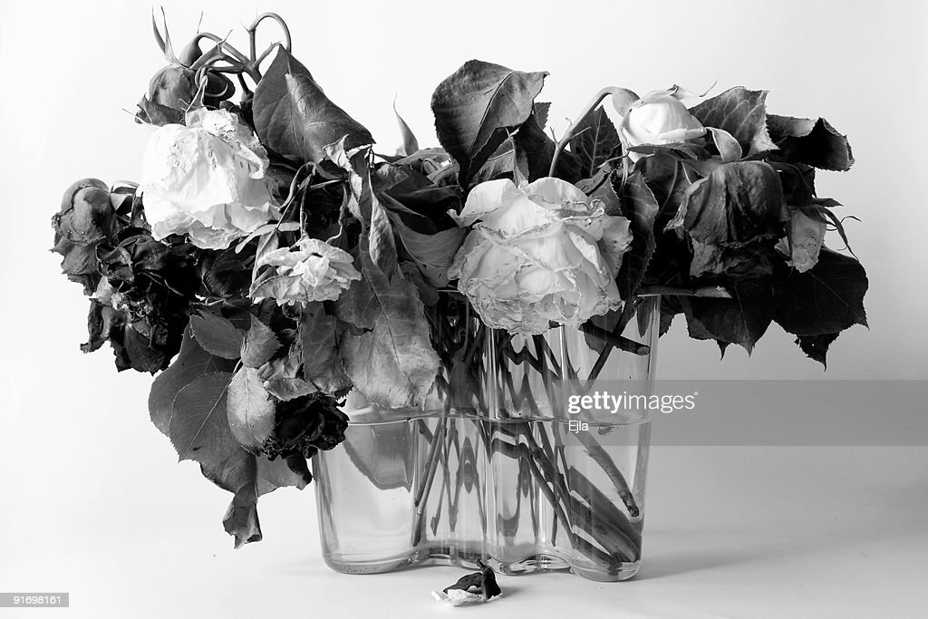death to mr rose Latest obituaries in pennsylvania, obituary listings by city and state search obituaries by state and city search obituaries by location.