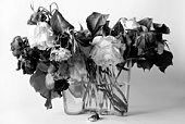 Dried roses B&W