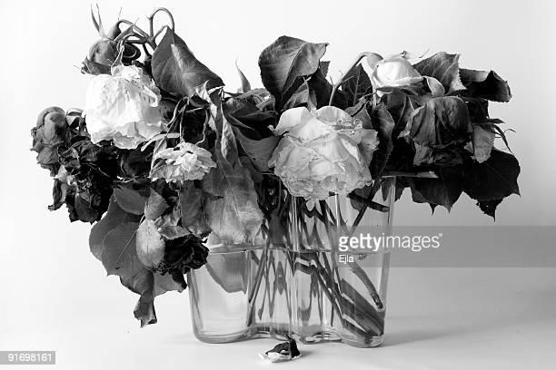 Secado rosas B & W