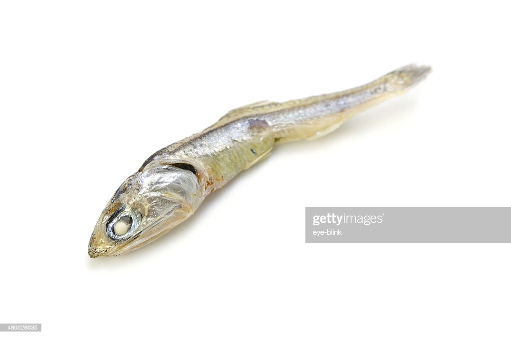 Dried Sardine : Stock Photo