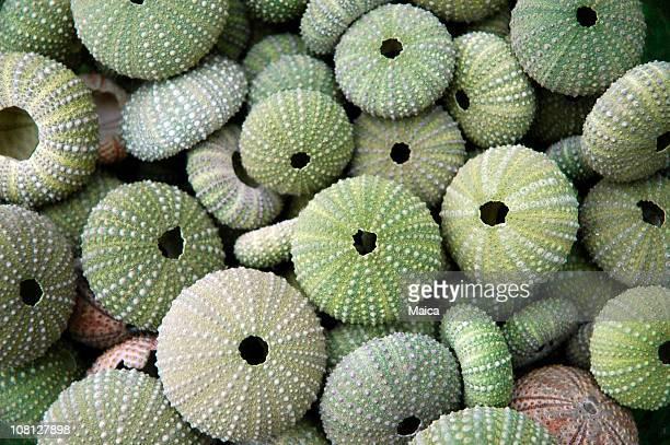 Seca en pila Urchins al mar
