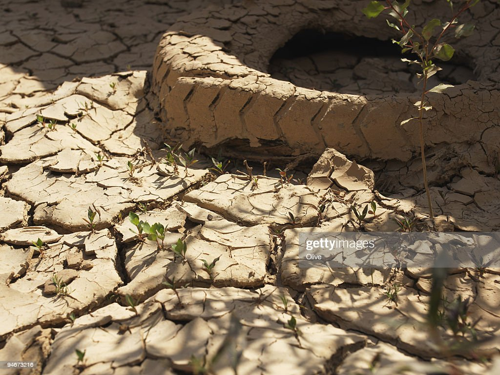 dried up ground : Stock Photo