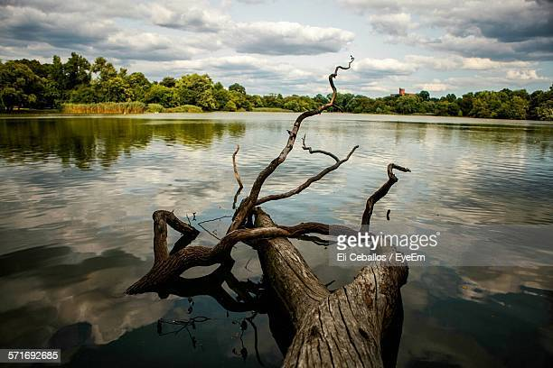 Driftwood In Calm Lake Against Cloudy Sky