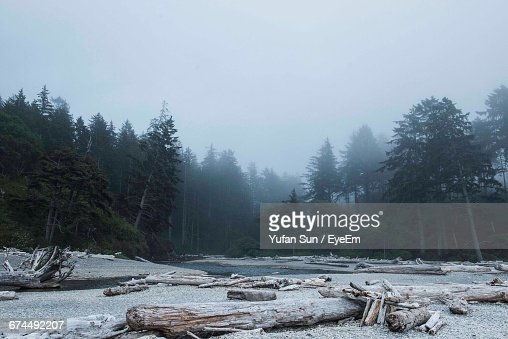 Driftwood In Foggy Weather At Olympic National Park Stock Photo