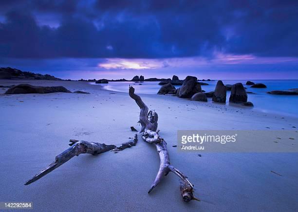 Driftwood log on beach