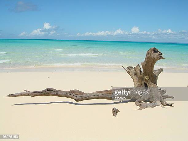 Driftwood on a lonley white sand beach of dreams