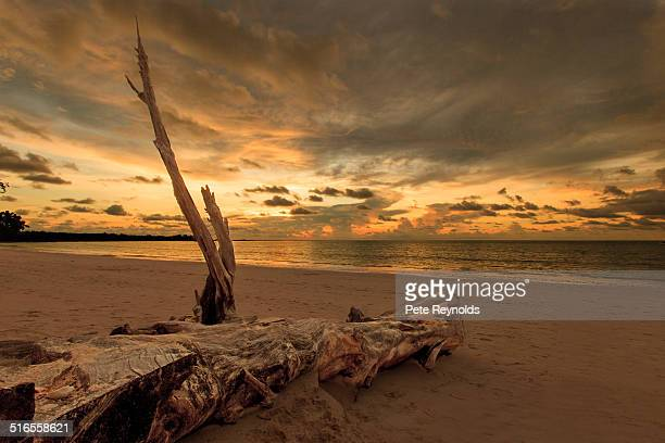 Driftwood on an Asian beach