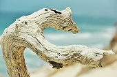 Driftwood On Beach